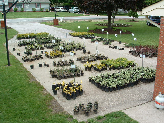 Our plant inventory after 4 weeks of sales - Starting A Plant Nursery